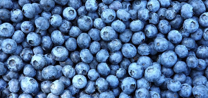 Blueberry_850x400