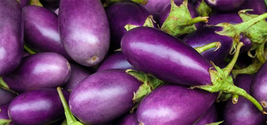 Eggplant_850x400