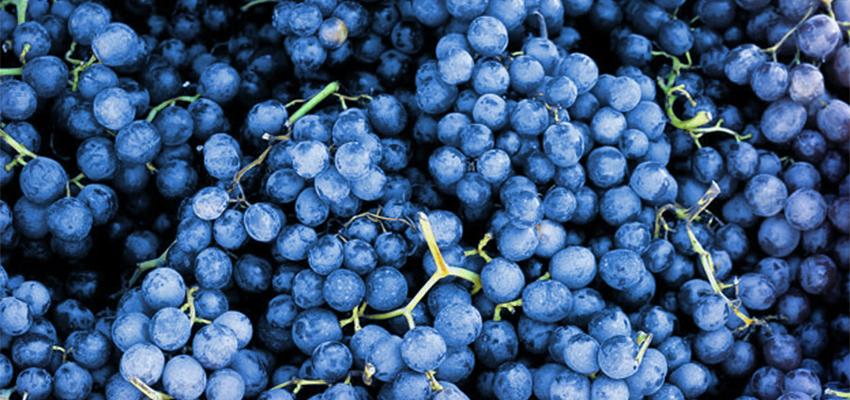 Grapes_850x400